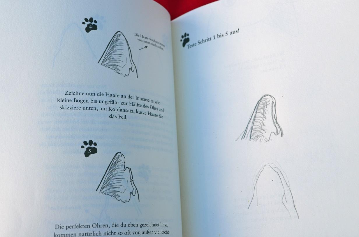 Rezension Warrior Cats Katzenzeichnen Katze Mit Buch